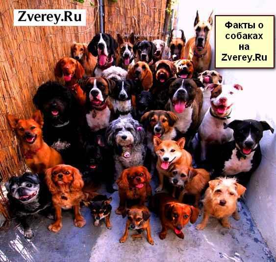 Интересное про собак