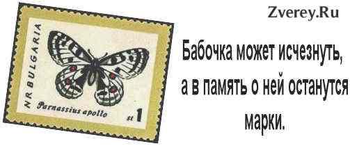 Почтовая марка Аполлон