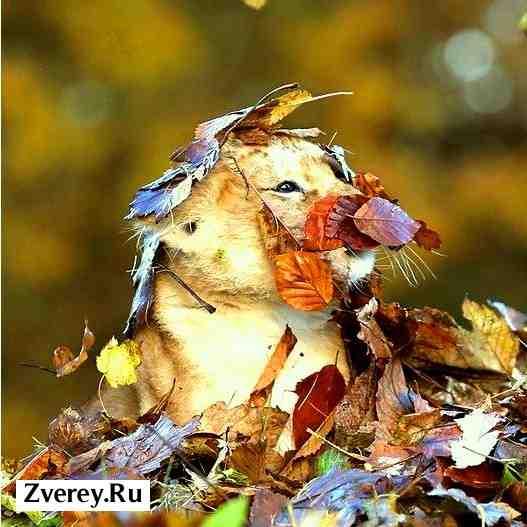Львенок и его клыки, а также листья