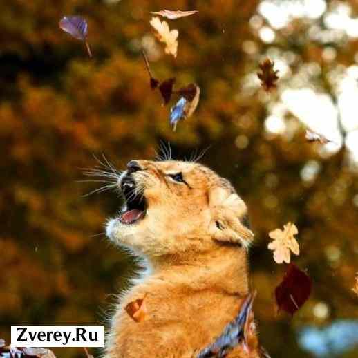 Фото львенка и листьев
