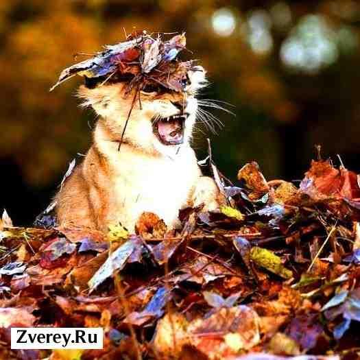 На фото львенок с листьями