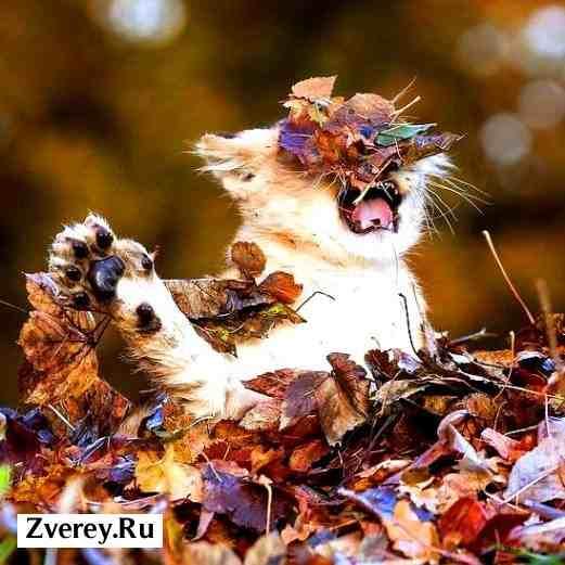 Львенок осенью играется с листьями