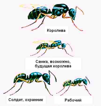 Рабочий, солдат и королева муравьев