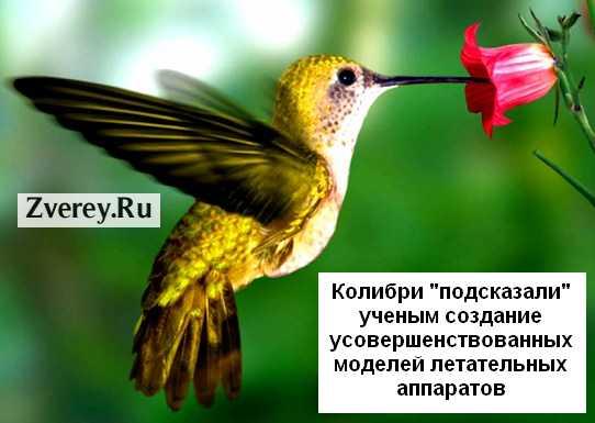 Современные летательные аппараты похожи на колибри
